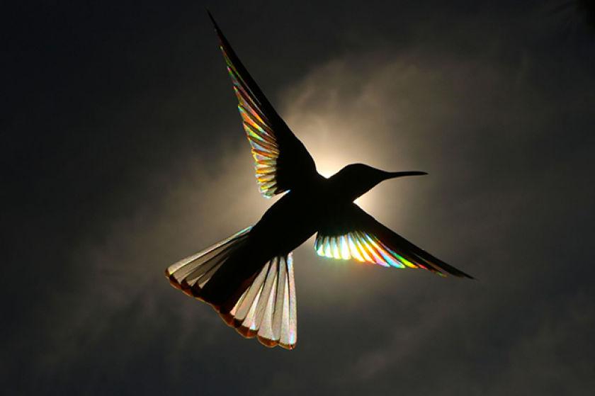 comment photographier un arc-en-ciel