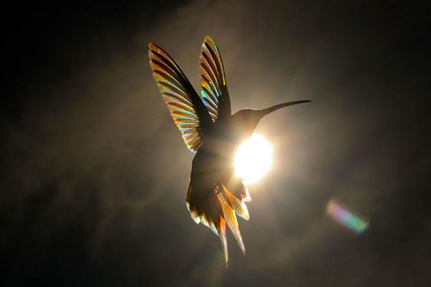 créer des effets de distorsion de la lumière, de réflexion et