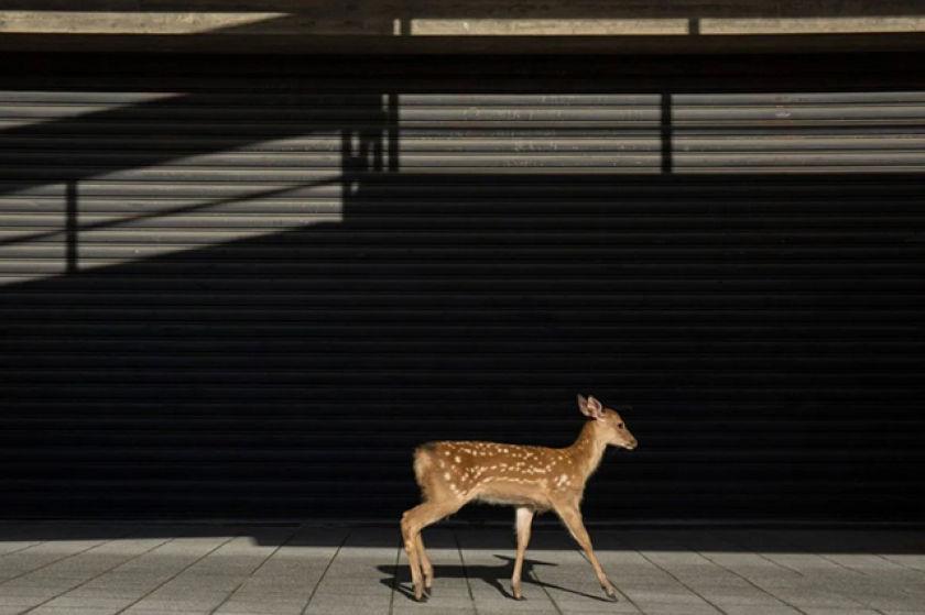 photographe Yoko Ishii